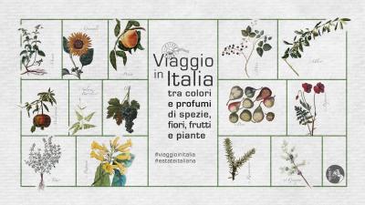 """cover IL """"VIAGGIO IN ITALIA"""" ATTRAVERSO ANTICHE IMMAGINI DELLA FLORA MEDITERRANEA"""